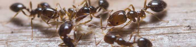 Pest Control Header