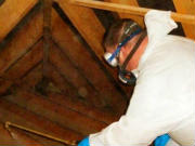 Woodworm Treatment Specialist
