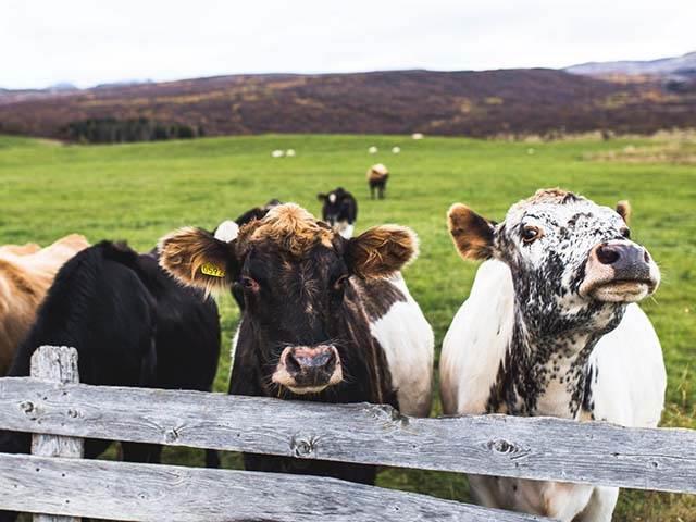 Livestock Finance