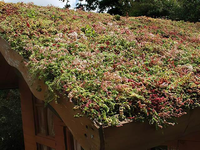 Sedum Green Roof (Greenroof)