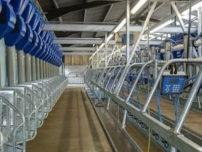 Handrails - Dairy Milking Plant