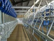 Handrails - Dairy Milking Plant